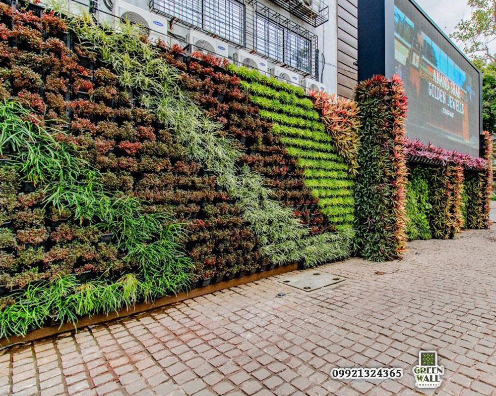 Green Wall Plants Nursery