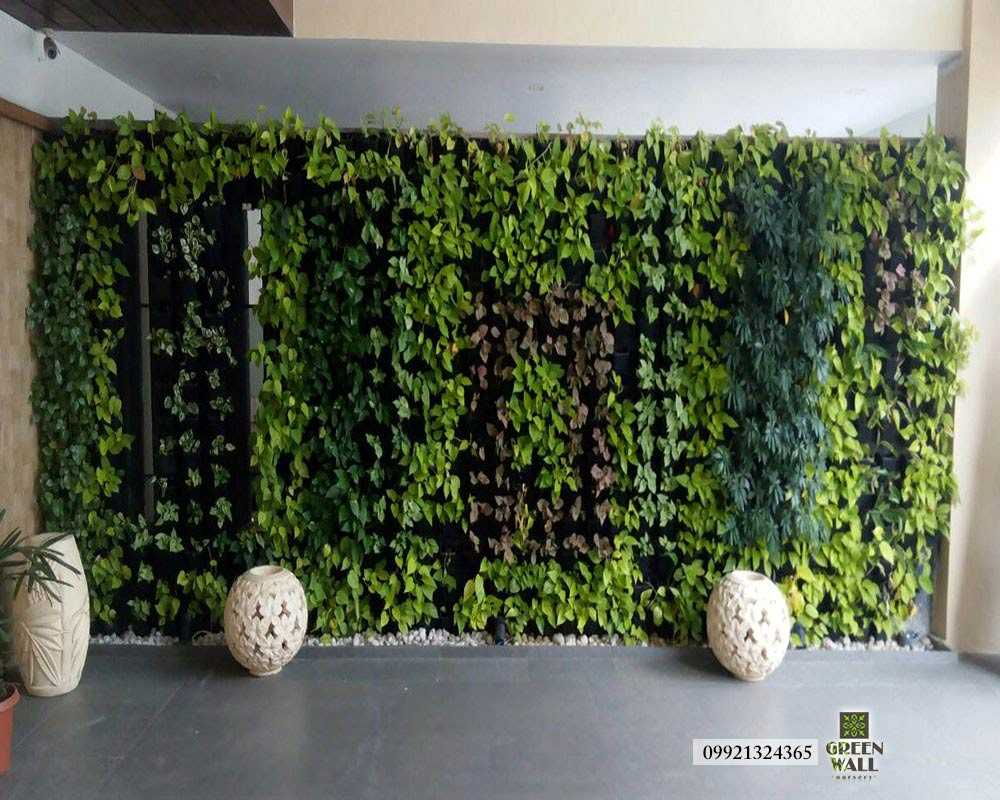 vertical Green Walls Nursery